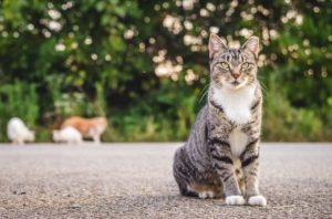 Feral Cats and Snap Vouchers