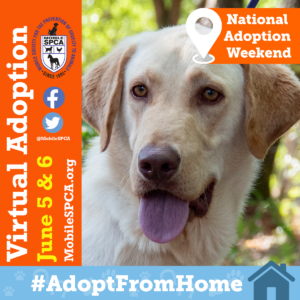 #AdoptFromHome – Virtual Adoption Friday & Saturday